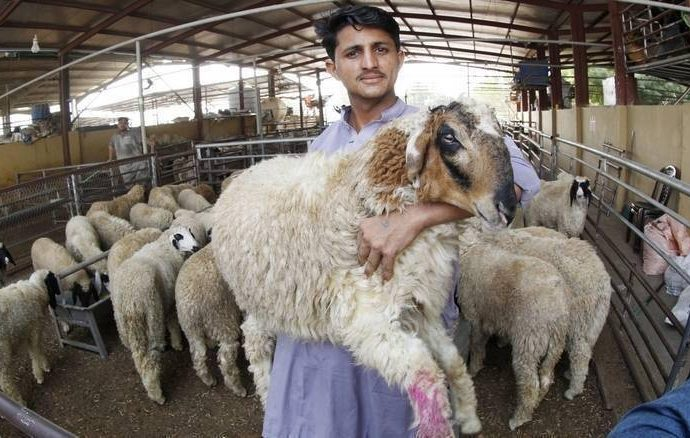 Eid Al Adha: Abu Dhabi issues new guidelines for sacrifices, distribution of meat – News