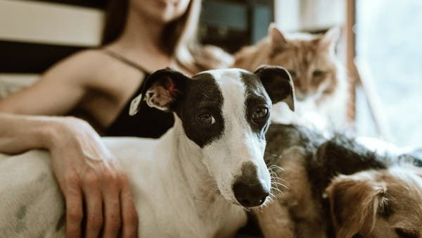 One in five pets caught COVID-19 from their owners: Study